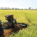 Key Challenges To Vietnam's Agricultural Sector Under TheTPP
